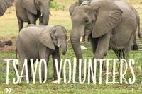Developing A Wildlife Observation Application For Volunteers In Kenya